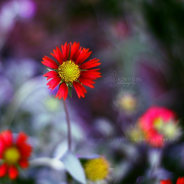 steph flower